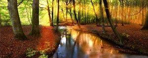 Лес панорама 12_0005