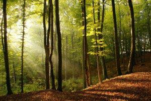 Природа, лес, солнце 13_0034