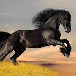 Лошадь 15_0041