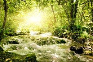 Природа лес река 13_0060