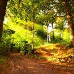 лето в лесу 13_0075