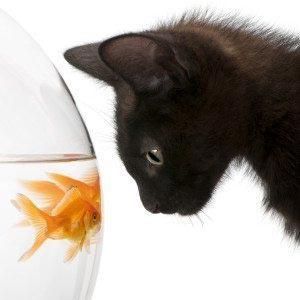 Коте и рыбка 15_0096
