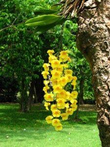 Цветы 08_0085