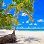 фотошпалери море, пальми 11_0052