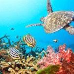 подводный мир 11_0061