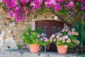 Цветы 601015
