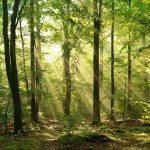 фотошпалери Ліс 4144552