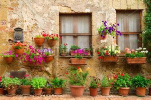 Цветы на улице -170809175