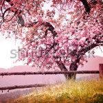 Квітучі дерева -167693018