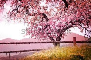 Весенние цветы -167693018