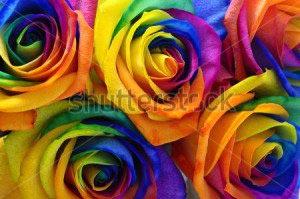 Цветы -168250484