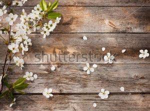 Фон, цветы -128947691