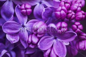 Цветы -257548306