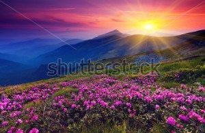 Горы и цветы -97696616
