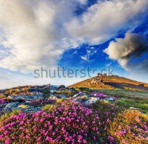 Вид с горы цветы -130505720