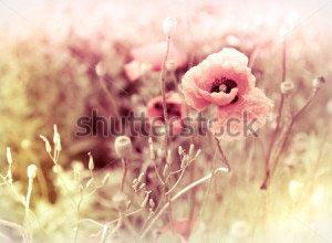 Цветы -81533959
