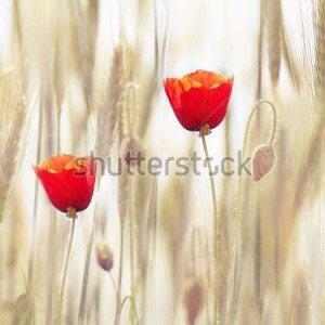 Цветы -69251659