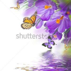 Цветы и бабочки -178264313
