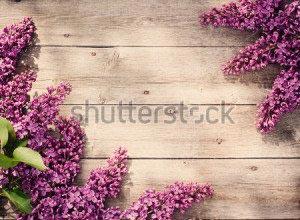 Фон цветы -131291522
