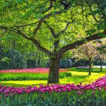 Парк и цветы -143332780