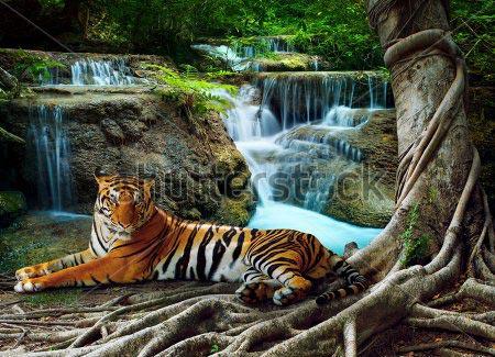 Фотошпалери Тигр 219340975