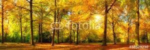 Осенний лес -89529230