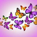 Бабочки -68694