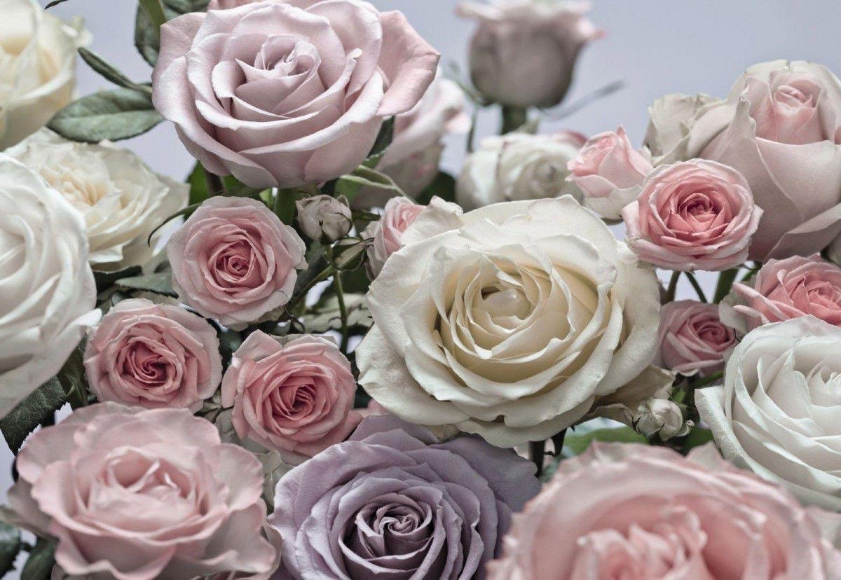 Фотообои на стену розы фото