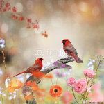 Птицы -79373542