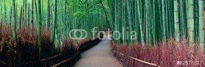 Бамбуковый лес -82576317