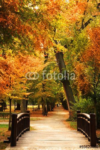 Фотообои Лес 93620060