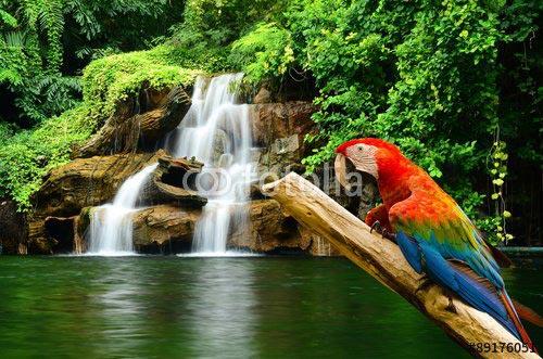 Фотообои Попугай 89176051