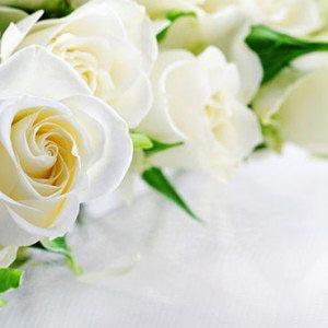 Розы -453209