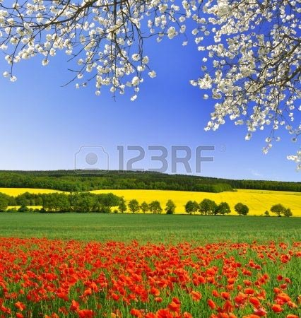 Фотообои Пейзаж 25347136