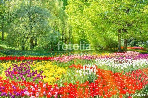 Фотообои Тюльпаны 112250788