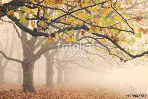 Фотообои Парк 119862781