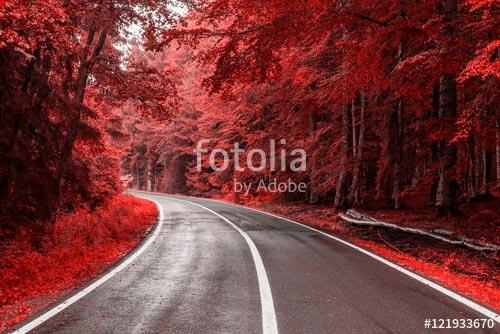 Фотошпалери Дорога -121933670
