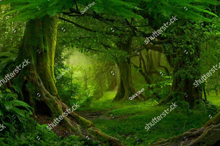 Фотообои 3д лес 428885464
