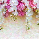 фотошпалери орхідеї 355800083