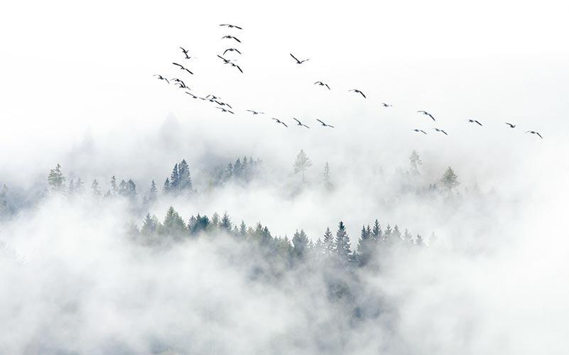 Фотообои Туман 1594743200