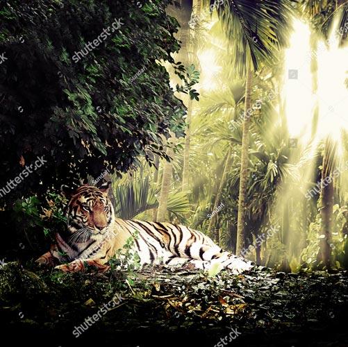 Фотообои Тигр 115262323