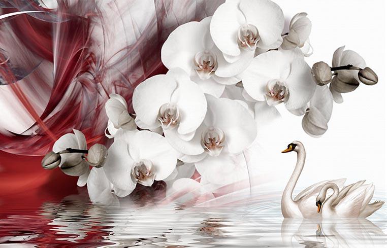 Фотообои Орхидеи 2406830684