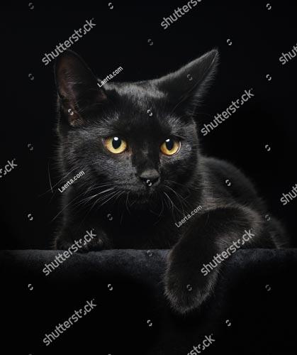 Фотообои Чорная кошка 25622551