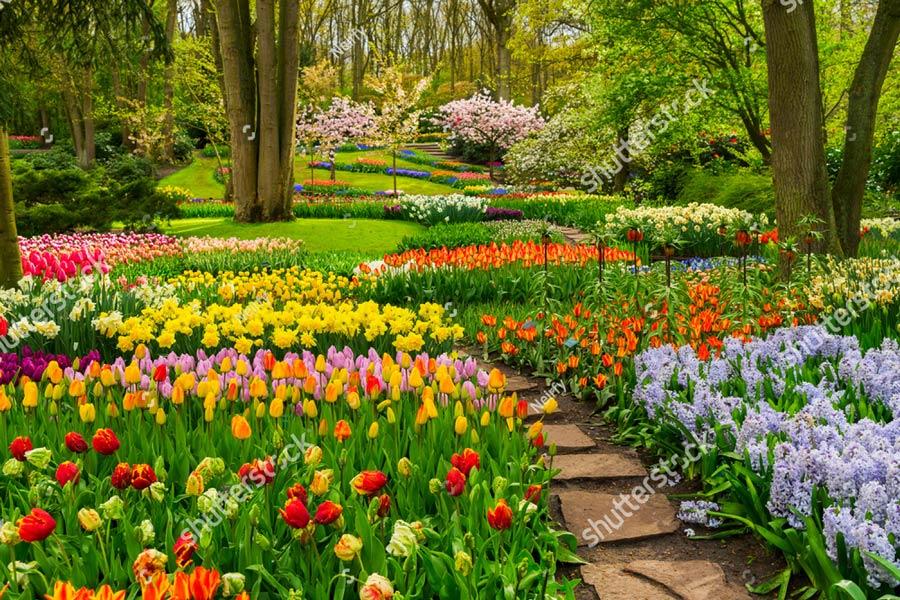 Фотообои Тюльпаны 525031105