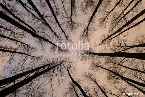 Фотообои Деревья 196875031