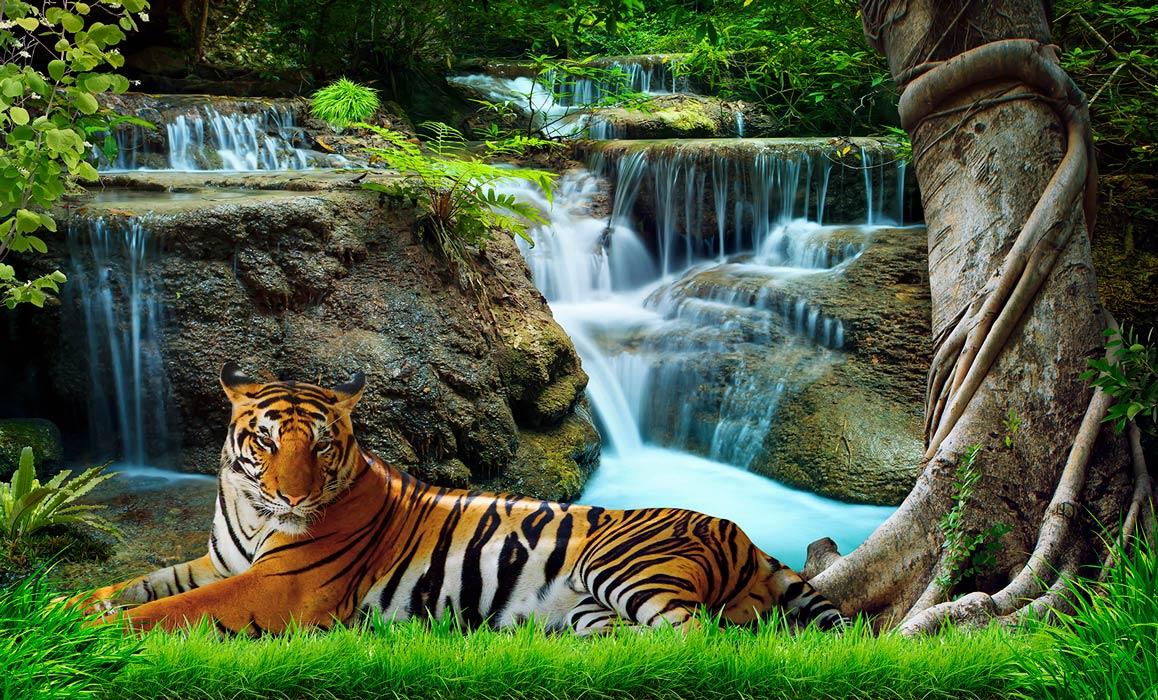 фотообои Тигр 219340975_1