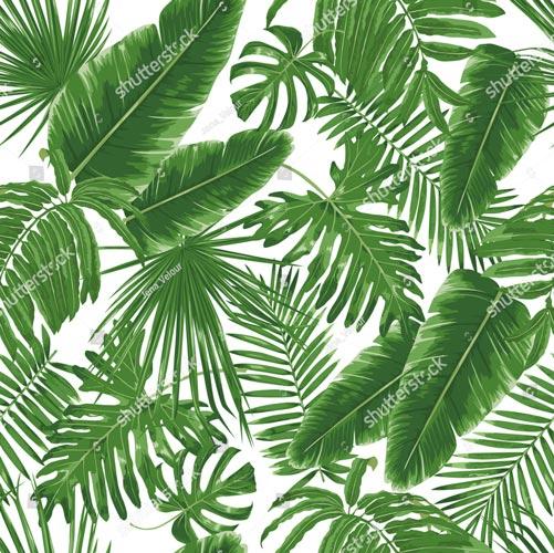 Фотообои Листья пальми 301462220