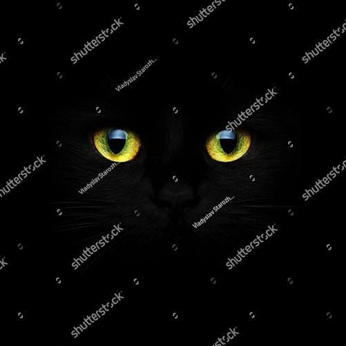 Фотообои Кошка 342499412