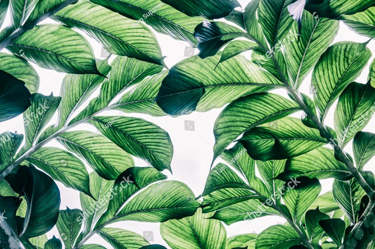 Фотообои Листья пальмы 432551146