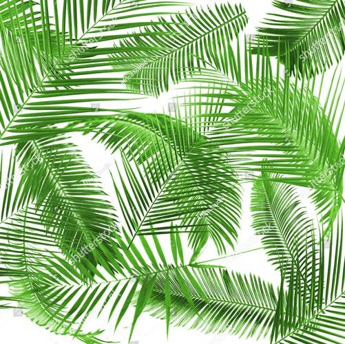Фотообои Листья пальмы 491794240